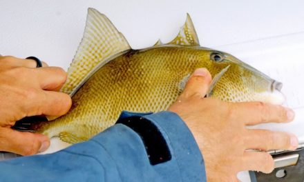 BlacktipH – Fishing for Triggerfish, Trout, Snappers, Jacks while Battling Red Tide and Terrible Weather