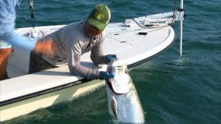 Islamorada Fly Fishing the Flats for Big Tarpon in the Florida Keys