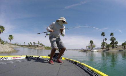 Lake Havasu Bed Fishing Tips and Tricks