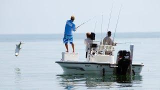 Monster Tarpon Hookup Beach Fishing off St Pete Florida