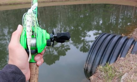 Catching ENORMOUS Bass While Bank Fishing (RECORD DAY)