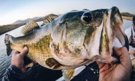 Giant Bass With No Graphs – Bass Fishing In A New Country!