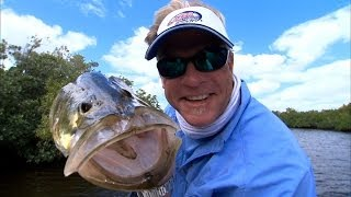 Fly Fishing for Snook in Florida Everglades National Park