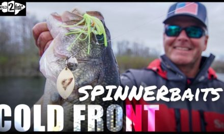 How Spinnerbaits Excel for Springtime Cold Front Bass