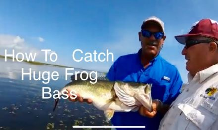 How To Catch huge frog bass with Gary Milicevic