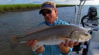 Charleston Redfish Fishing the Flood Tide Grass in South Carolina