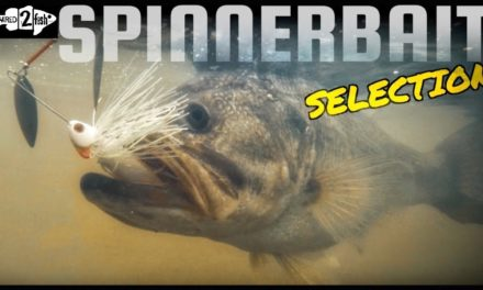 Choosing the Best Spinnerbait for the Situation