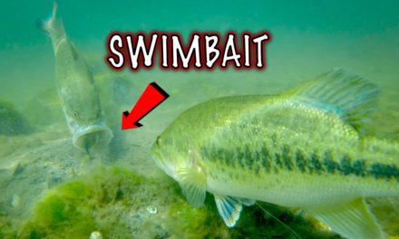 Which Bluegill Swimbaits Catch More Bass? Amazing Underwater Fishing Footage!!