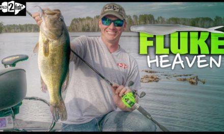 Tips for Fluke Fishing Bass on Grass Flats