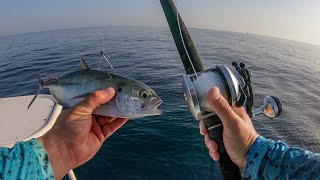 Lawson Lindsey – Live Baiting Offshore