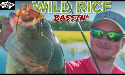 How to Flip and Pitch Bass in Matted Wild Rice