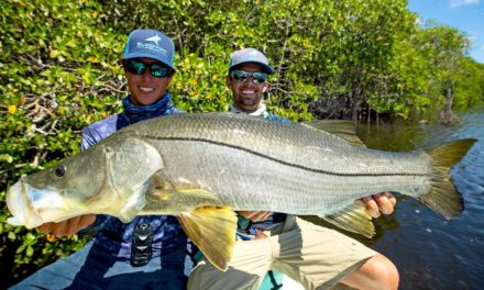 BlacktipH – MASSIVE Topwater Snook Fishing