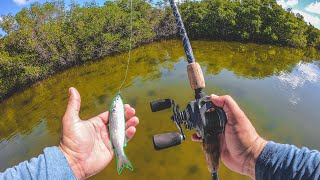 Lawson Lindsey – Sight Casting Big Fish with Live Finger Mullet on a Crystal Clear Flat