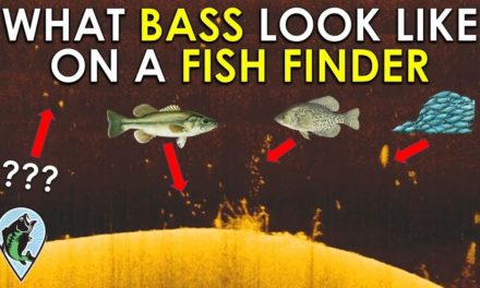 Identify Bass on Fish Finder in 3 Easy Steps!   Fishing Sonar Basics