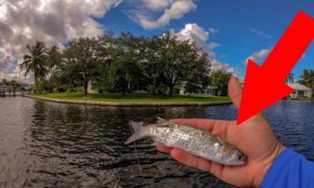 Lawson Lindsey – Live Bait Gets Destroyed by Big Fish Against SeaWalls