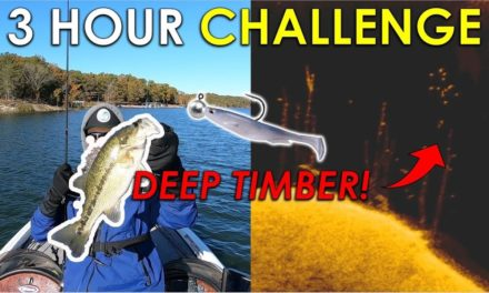 Swimbaits in 40ft Trees For Suspended Fall Bass!   3 Hour Challenge