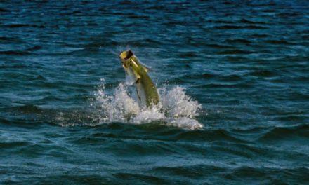 Tarpon Fishing Destin Florida and Port Canaveral Cobia Fishing