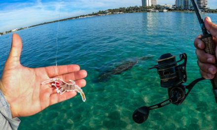 Lawson Lindsey – Tropical Flats Fishing With Shrimp In Ultra Clear Beautiful Water
