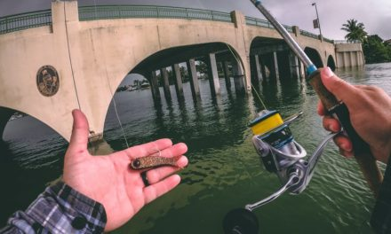 Lawson Lindsey – Florida Winter Multi Species Fishing
