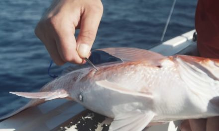 Salt Strong | – How To Properly Vent An Offshore Fish (With Capt. Dylan Hubbard)