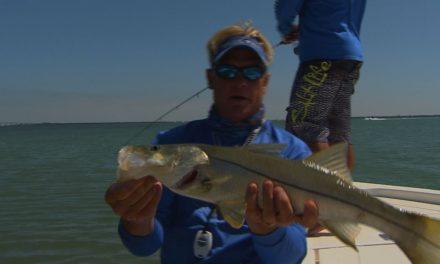 Inshore Snook and Redfish Fishing in Tampa Bay Florida