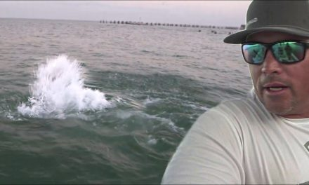 Scott Martin Pro Tips – Killer Dolphins Keep Attacking!