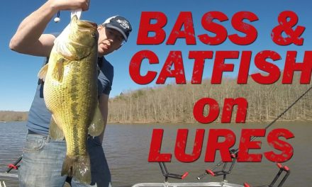 Fishing for bass and catfish with lures. Swim baits and jigs for giant fish!