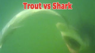 Salt Strong   – Incredible Underwater Lure Footage!! (Catching Speckled Trout On Paddletails)