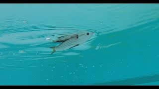 Salt Strong | – LIVETARGET Hollow Body Mullet Pros And Cons