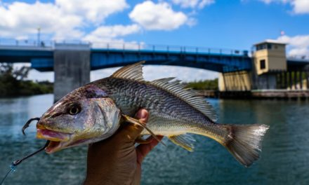 Lawson Lindsey – Using Giant Bait and a $1,100 Reel To Catch Bridge Monsters