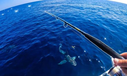 Lawson Lindsey – Boat Attacked By Sharks While on an Insane Offshore Topwater Bite!