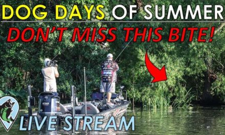 Everyone Misses This Shallow Bite in the Late Summer | FTM Live Stream #56