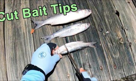 Salt Strong   – How to Cut Up Baitfish (For More Redfish, Snook, Black Drum & Tarpon)