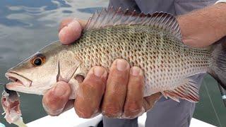 Salt Strong | – 2 Tricks To Catching Big Mangrove Snapper Inshore