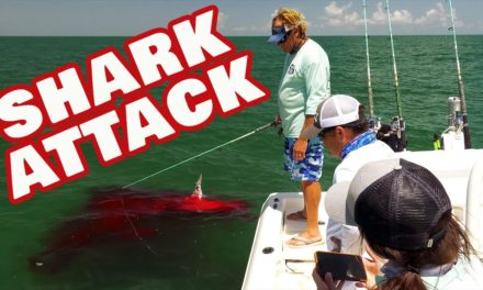 Shark Attack and Inshore Fishing for Redfish on Florida's Space Coast
