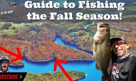 Mike Iaconelli Secret Tips & Tactics – Guide to Fishing the Fall Season!