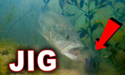 Scott Martin Pro Tips – Bed Fishing Tricks With Amazing Underwater Footage!