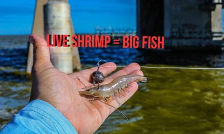 Lawson Lindsey – Fishing For Bridge Monsters With Live Shrimp (2 New PB's)