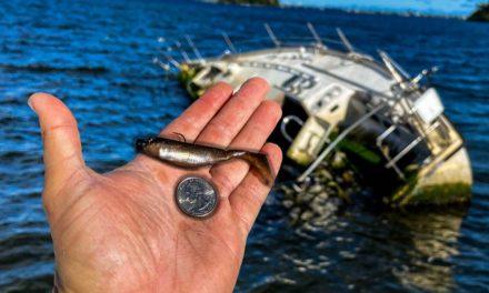 Lawson Lindsey – Giant Fish Eats Micro Swimbait While Fishing Inshore Saltwater!